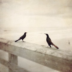 Me and you (lorenka campos) Tags: art love staugustine fade beach birds