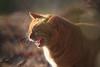 K_1_3066.jpg (akahigeg) Tags: 猫