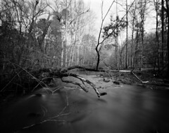 Bend, New Hope Creek (Pinhole) (F. Neil S.) Tags: pinhole titan harman 4x5 longexposure creek downedtree riffles arista eduultra100 sheet film selfdev xtol epsonv700 blackwhite blancetnoir monochrome bwfp