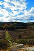 Dover1 (KatieYago1) Tags: nature hudsonvalley path fall autumn