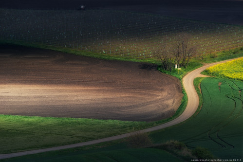 Czech Republic. South Moravia. Landscape park Hovoranske louky