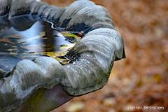 Birdbath (Sage Girl Photography) Tags: nature wilmington northcarolina halyburtonpark birdbath leaves water bokah nikond3300 sagegirl