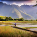 Mai Chau Valley paddy field worker Impression