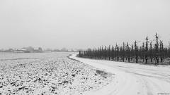 Binkom (B.Graulus) Tags: photography landscape winter snow binkom lubbeek fields landschap sneeuw velden monochrome belgium belgië belgique belgica blackandwhite canon outdoor fotografie bw