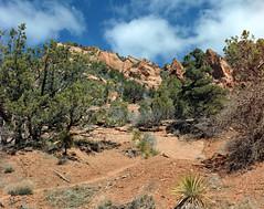 Canyonland Adventure (Scott Holcomb) Tags: kolobterraces zionnationalpark utah asahipentax6x7 supermulticoatedtakumar6x71475lens tiffen82mmuvfilter rolleicn200film 120film 6x7 mediumformat epsonperfectionv600 photoshopdigitalization