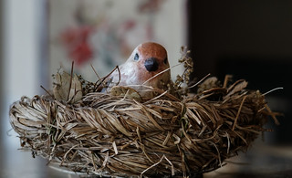 Bird in a nest