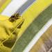 Bees PANAMA CITY Pandemonio 2017 - 01