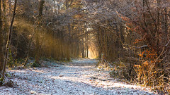 Winter / Hiver (tribsa2) Tags: marculescueugendreamsoflightportal winter hiver forest foret bos snow