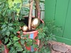 Shropshire Organic Gardeners display at Shrewsbury Flower Show 2015 (wonky knee) Tags: display shrewsbury fairytales magicgarden nurseryrhymes goldeneggs shrewsburyflowershow ukshropshire shropshireorganicgardeners
