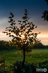 Sunset behind tree (Gian's Photos) Tags: sunset milan tree tramonto bokeh behind albero tre atmosfera dietro