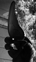 My lover is an angel (Aramisse) Tags: italy friedhof love cemetery angel death europe italia mort ange tombstone genoa genova amour romantic angelo engel sensuality italie cimitero cimetire romantique gnes sensualit cimiteromonumentaledistaglieno aramisse