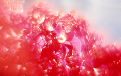 img010 (Photo Taker #9) Tags: infrared orangefilter colorinfraredfilm aerochrome
