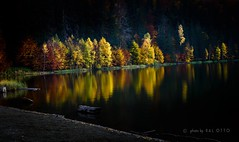 Autumn reflection 2 (go-Foto) Tags: autumn yellow landscape goldcollection greaterphotographers