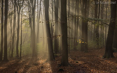 First rays in Friston (Sue MacCallum-Stewart) Tags: trees light nature sussex countryside earlymorning sunrays fristonforest