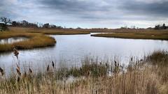 (mahler9) Tags: mahler9 jaym november 2015 wetland marsh reeds clouds newport rhodeisland sachuestpoint