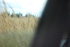 сентябрь (Anastasiia Z.) Tags: autumn sun flower color green fall texture film nature rain analog canon bokeh outdoor folk f14 m42 around zenit analogue ontheroad eclectic closer helios aesthetic kinfolk а зенит helios442 гелиос vsco пшеница гелиос442 впути м42 canon550d измашины vscofilm vscocam vscogrid vsconature