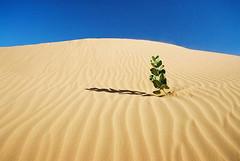 Mauritania (denismartin) Tags: africa travel sky sahara trek sand alone desert afrika lonely wüste atar mauritania mauritanie erg الإسلامية canoneos500 chinguetti calotropisprocera الجمهورية ergouarane denismartin pommierdesodome الموريتانية mūrītānyā argenticpic lagueila