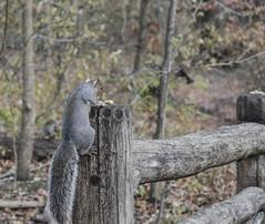 _DSC4269 (purin_cess) Tags: centralpark 2016 autumn 11月 十一月 秋 中央公園 紐約 ny newyork