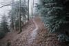 Waldweg, der (Toni_V) Tags: m2402689 rangefinder digitalrangefinder messsucher leica leicam mp typ240 28mm elmaritm12828asph hiking wanderung randonnée escursione jurahöhenweg dof bokeh wood forest wald fog mist nebel solothurn belchenflue trail wanderweg sentiero winter switzerland schweiz suisse svizzera svizra europe ©toniv 2016 161229