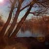 Songs of color-1 (Joylelies) Tags: kralingseplas tree songsofcolor