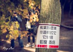 IMG_1668 (CBR1000RRX) Tags: 650d canon taiwan travel tourist landscape maple leaf autumn