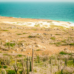 Aruba 2014 (Thomas Hawk) Tags: aruba carribean beach cactus horse ocean