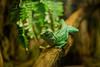 lizard (Valery Parkhomenko) Tags: nikon d610 arsat 50mm lizard animal animals planet zoo green wood tree ukraine outdoor flowers flower forest jungle fx nature ngc