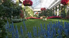 the grand room, Longwood Gardens (tcd123usa) Tags: longwoodgardens pennsylvania leicadlux4 winter2017 flowers