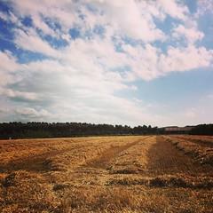 dit gebeurde er op de boerderij in (De Phlox) Tags: boerderij camping biggekerke minicamping minicampingdephlox graan lavendel bloemen zaad gras massey ferguson miedema new holland mf trekker tarwe