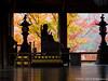 長谷寺の錦秋(Hase-dera Temple in autumn) (cyber0515) Tags: 日本 奈良 長谷寺 japan nara