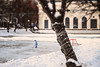 Little hockey player (allejandrine) Tags: hockey baby player pond ice snow blue street streetphotography