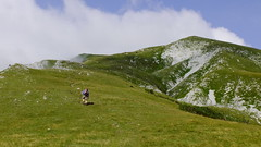 The long way to the top (Dioscorea Mexicana) Tags: hochschwab berg österreich grün gras wiese kühe cows mountain
