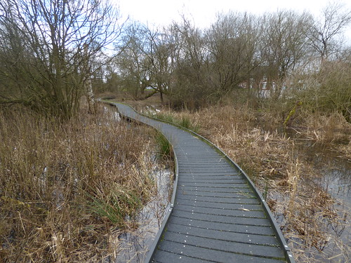 Kingsmead March - Local Nature Reserve - North Walls, Stafford