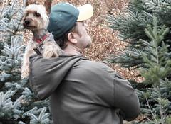 Views (Farmernudie) Tags: trip journey traveling travel woods trees pine spruce leaves outdoors outside dog terrier pals friends walking hiking hike hood hat furry capone