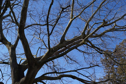 2017-02-12 Twigs Test - Take 1 [#2]