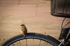 Pájaro al Sol - Bird in the Sun (i.puebla) Tags: alemania berlín pájaro bird bicicleta bike bicycle sol sun calle callejeando streetview streetphoto nikon d7200