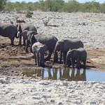 Elefanten an einer Wasserstelle