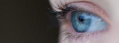 Clear Human Eye (Image Catalog) Tags: iris eye face clear vision eyelash sight biology pupil blueeye publicdomain optometry