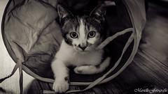 Pretty little girl (Marielle - Fotografie) Tags: portrait bw pet cats pets beautiful face cat 35mm eyes nikon kitten sweet indoor flickrsbest abigfave d5100