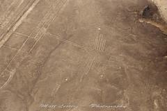 Hummingbird (matalest) Tags: hummingbird nazcalines peru nazca aerial landscape