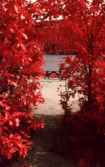 img018 (Photo Taker #9) Tags: infrared orangefilter colorinfraredfilm aerochrome