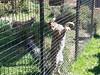 20150919_114723 (mjfmjfmjf) Tags: oregon zoo 2015 greatcatsworldpark
