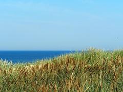 WellenForm (rgiw) Tags: meer wasser wind himmel olympus gras blau sylt nordsee wetter dne omd em1 wattenmeer hafer 40150mm mzuiko