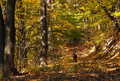 az erdőben / into the woods (debreczeniemoke) Tags: wood autumn dog forest leaf kutya ősz erdő frakk levél olympusem5