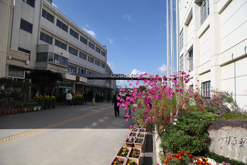 秋桜の咲く校舎
