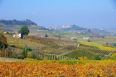 Le Langhe, Piedmont, Italy (mimipet.com) Tags: autumn italy colors lines italia piemonte vineyards autunno piedmont есен lelanghe httpwwwtravelmapitalycompiedmontlanghe wwwtravelmapitalycom travelmapyourtourinitaly