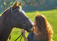 My Big Pony (paulinuk99999 (lback to photography at last!)) Tags: horse kiss explore pony backlit rider equestrian paulinuk99999 sal70400g