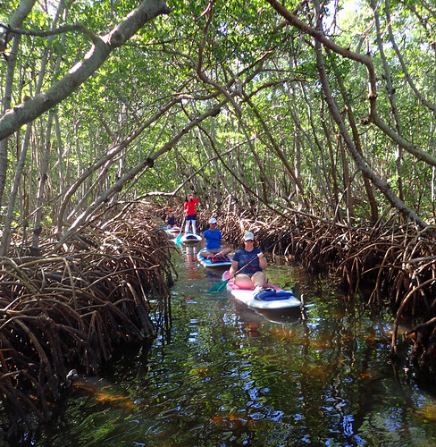 11_29_15 Private Paddle Tour Lido Key FL 02