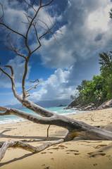 DSC_9791 (NICOLAS POUSSIN PHOTOGRAPHIE) Tags: soleil eau sable bleu coco fin vague plage rocher palmier bois seychelle turquoide