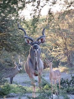 Botswana Hunting Safari 68